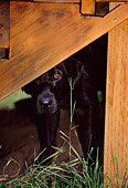 DOG 18 DB0084 01
