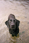 DOG 18 DB0086 01