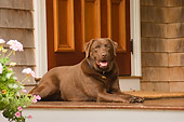 DOG 18 DB0090 01