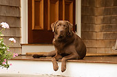 DOG 18 DB0092 01