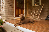 DOG 18 DB0093 01