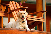 DOG 18 DB0109 01