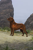 DOG 18 DC0052 01