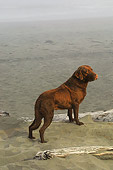 DOG 18 DC0053 01