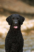 DOG 18 DC0054 01