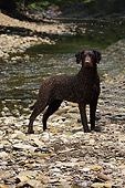 DOG 18 DC0055 01
