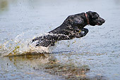 DOG 18 DC0059 01