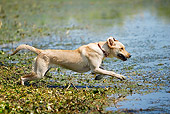 DOG 18 DC0062 01