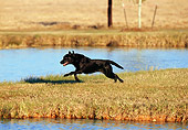 DOG 18 DS0010 01