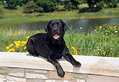 DOG 18 FA0001 01