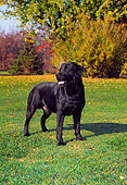 DOG 18 FA0006 01
