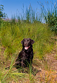 DOG 18 FA0007 01