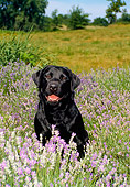DOG 18 FA0009 01