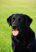 DOG 18 FA0010 01