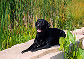 DOG 18 FA0011 01