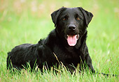 DOG 18 GR0003 01