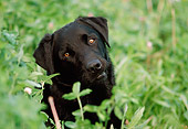 DOG 18 GR0004 01
