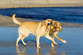 DOG 18 KH0007 01