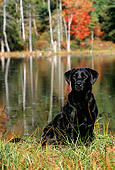 DOG 18 LS0004 01