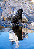 DOG 18 LS0005 01