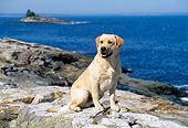 DOG 18 LS0008 01