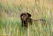 DOG 18 LS0009 01