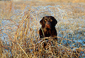 DOG 18 LS0010 01