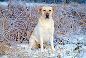 DOG 18 LS0011 01