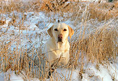 DOG 18 LS0012 01