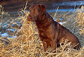 DOG 18 LS0014 01