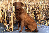 DOG 18 LS0015 01