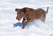 DOG 18 LS0019 01