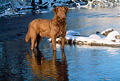 DOG 18 LS0020 01
