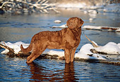 DOG 18 LS0021 01