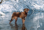 DOG 18 LS0023 01