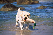 DOG 18 LS0024 01