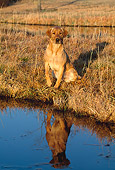 DOG 18 LS0025 01