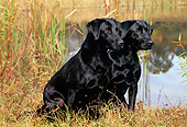 DOG 18 LS0030 01