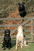 DOG 18 NR0025 01