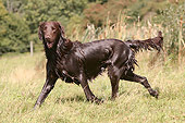 DOG 18 NR0032 01