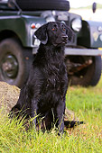 DOG 18 NR0034 01