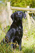 DOG 18 NR0035 01
