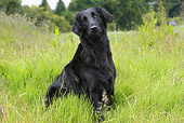 DOG 18 NR0043 01