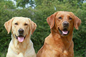 DOG 18 NR0045 01