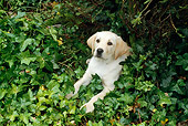 DOG 18 RC0001 01