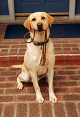 DOG 18 RK0008 02