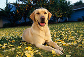 DOG 18 RK0014 07