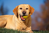 DOG 18 RK0016 03
