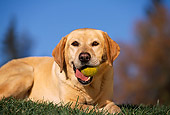 DOG 18 RK0016 06