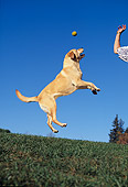 DOG 18 RK0020 17